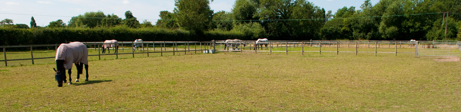 Equine Recuperation - Binfield Berkshire, the Equine Recuperation Centre is a recently opened, family run business in picturesque Binfield near Ascot and Bracknell